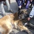 07災害救助犬キャンペーン2