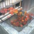 殿ヶ谷戸公園、紅葉
