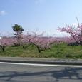 032桃畑